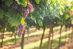 Wine Tour - Itinere