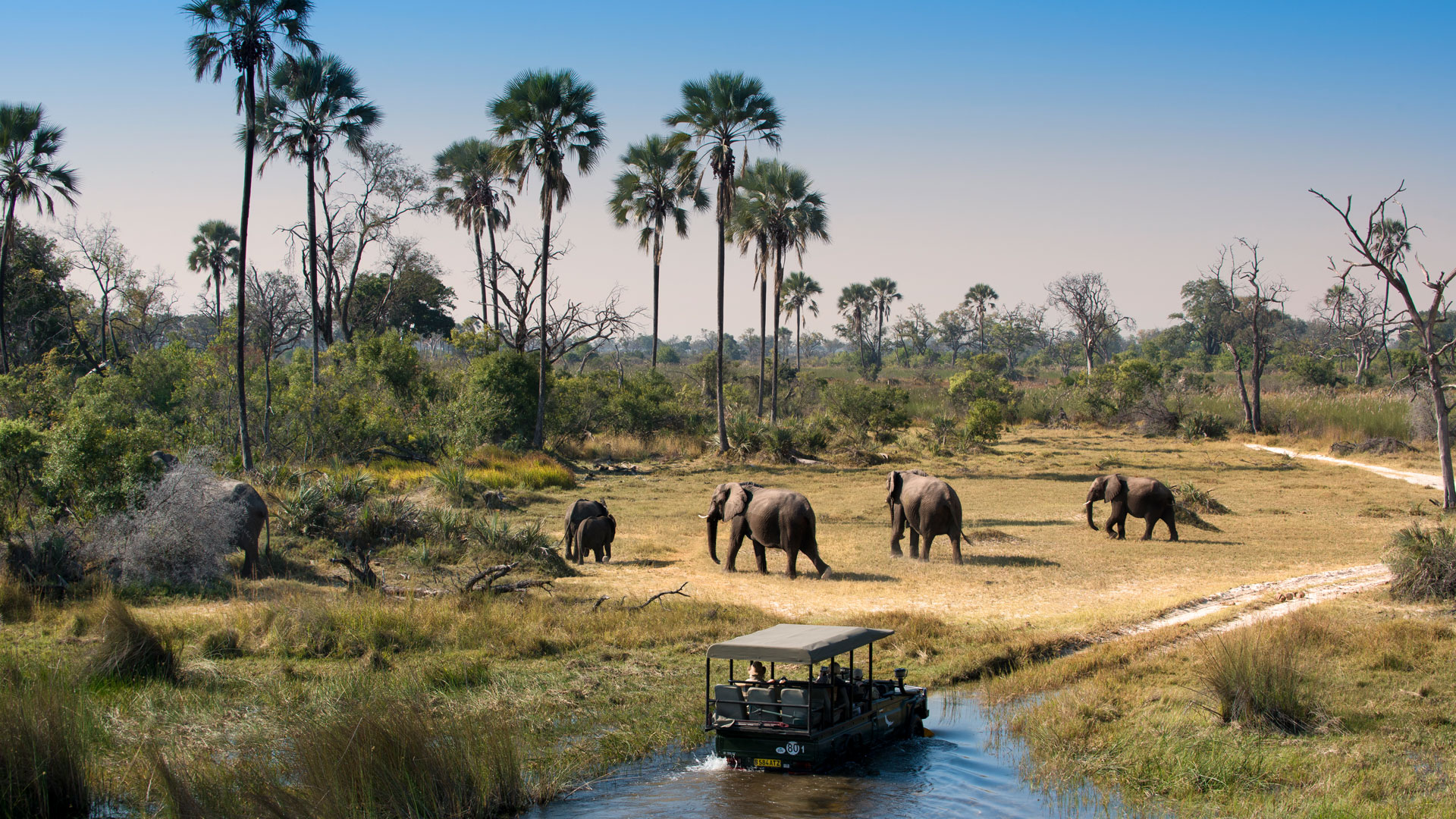 Herd Of Elephants Walking While Guests Cross Channel On A Safari Game Drive In Botswana