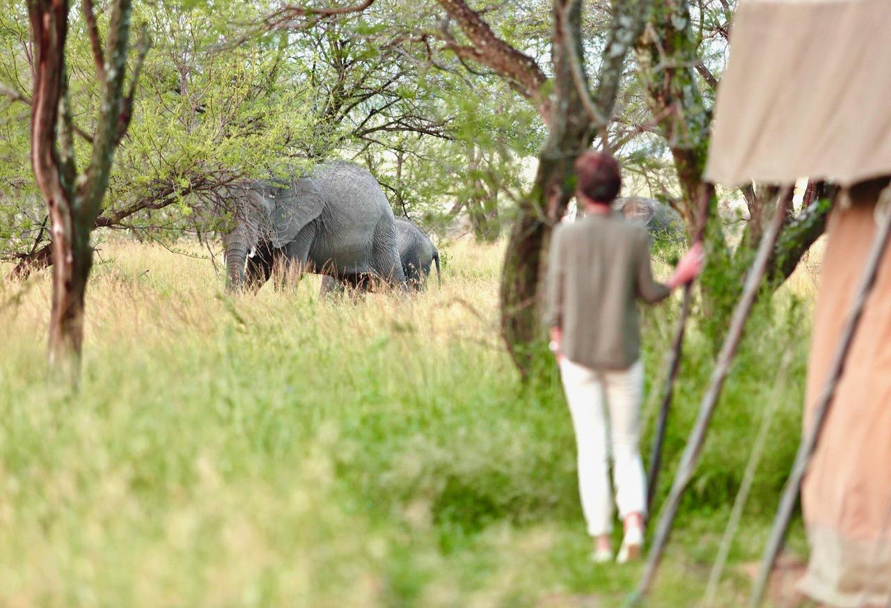 Olakira Elephants In Camp