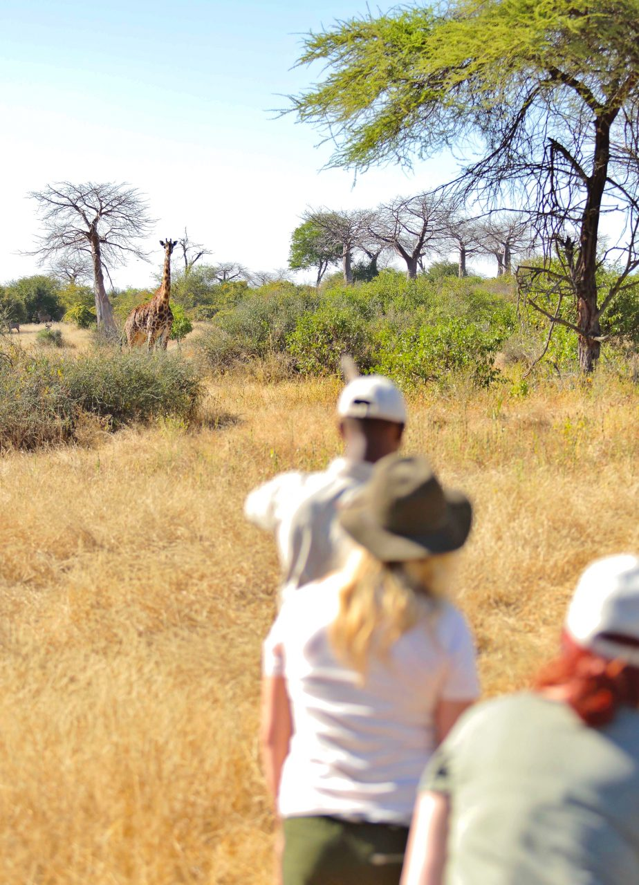 Walking Safari With Head Guide Moinga 2