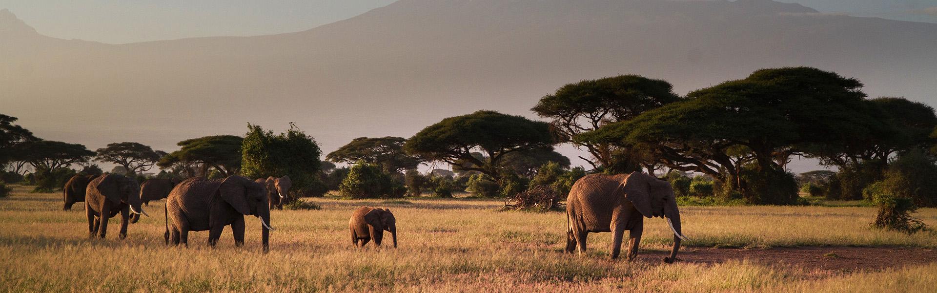 Tailor-made luxury safari in Tanzania